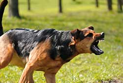Chicago Dog Bite Lawyers
