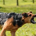 Lawyers Who Handle Dog Bite Cases – Chicago Dog Bite Lawyer, David Baez
