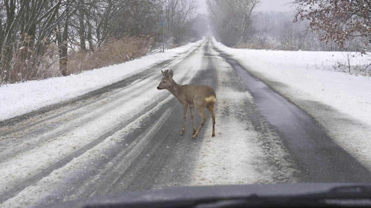 Illinois Deer vs  Car Accidents, Staying Safe This Winter | Willens