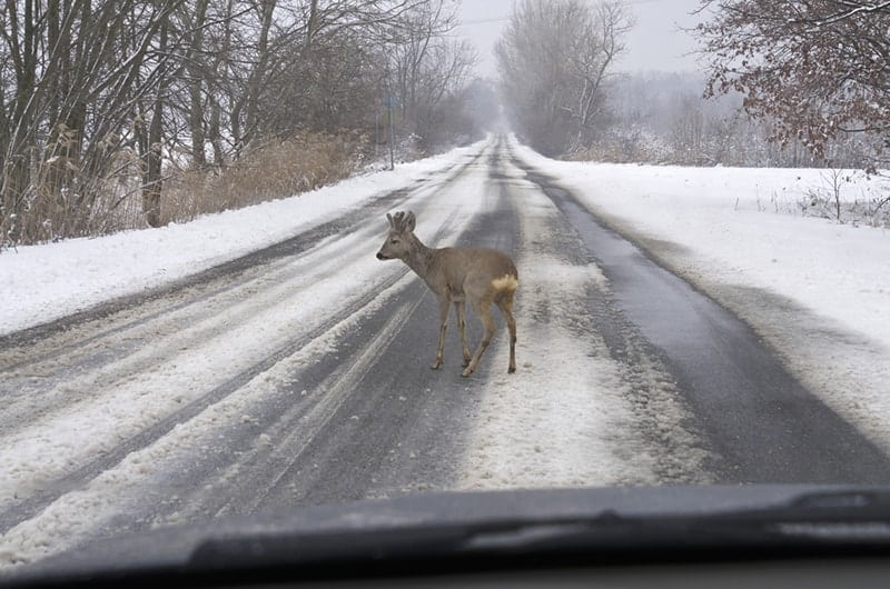 Illinois-Deer-Car-Accidents-Staying-Safe-This-Winter